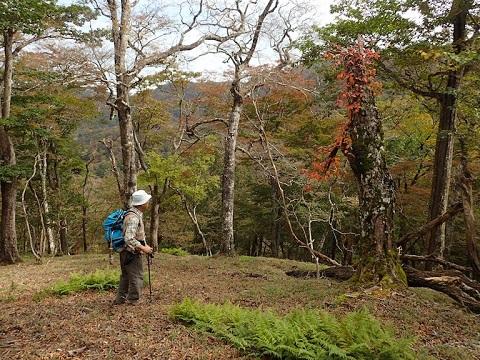 Yuzuriha281019akazore2