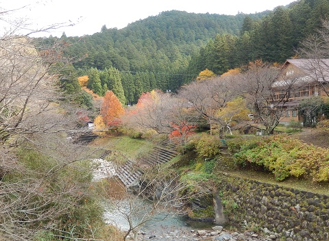 Koyo281115hasikara