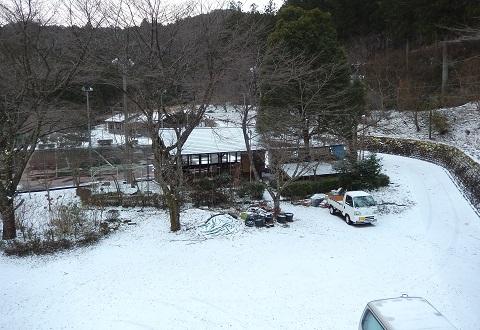 Yuki29115sanrinshaniwa
