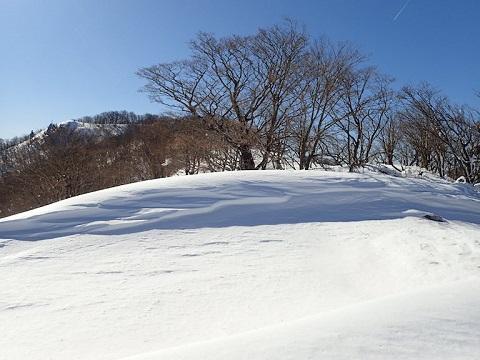 Yuzuriha29128hinoki3