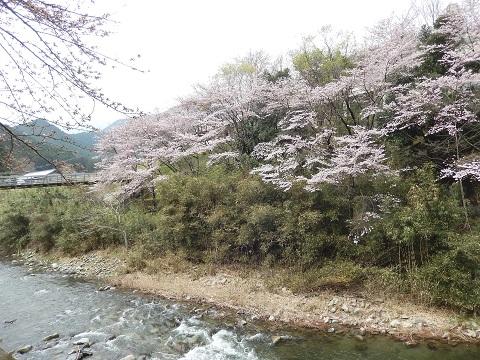 Sakurataigan2949