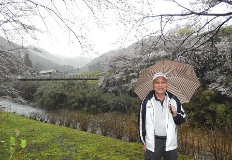 Yabusawa29411sakurahasi