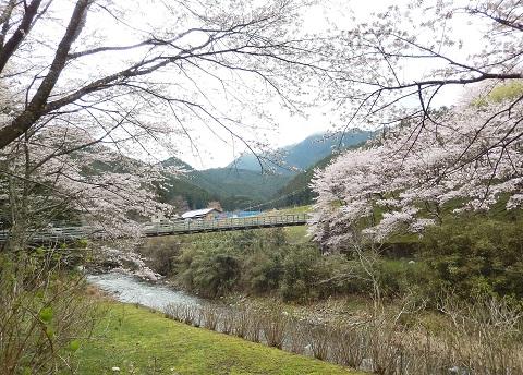 Sakura29412