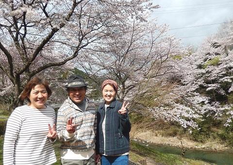 Kameitaka29413sakura1