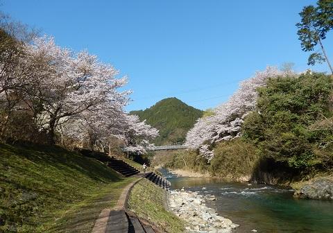 Sakura29413kawa1