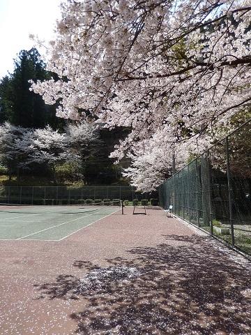 Sakura29416coat