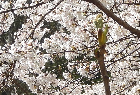 Tarame29416sakura