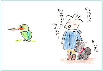 Torikawasemi