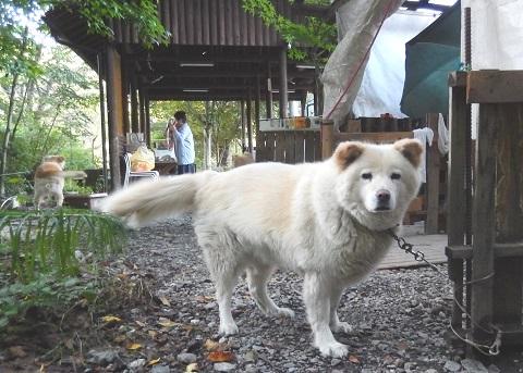 Banban29104koyamae2