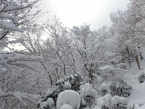 Yuzuriha30111miune1