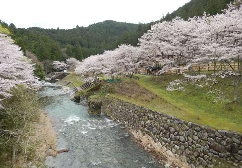 Sakura29412hasiyori