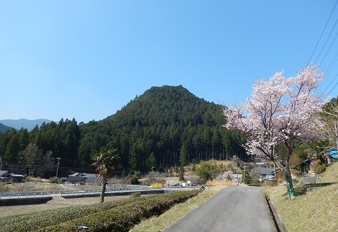Sakurahaya30328siroyama