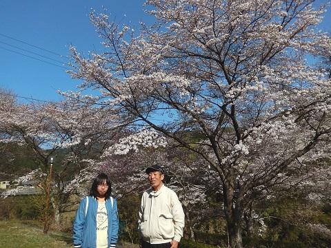 Maruyama30331sakura