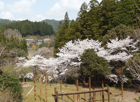 Sakura3042hirobatouge
