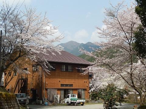 Sakura3042honkanb