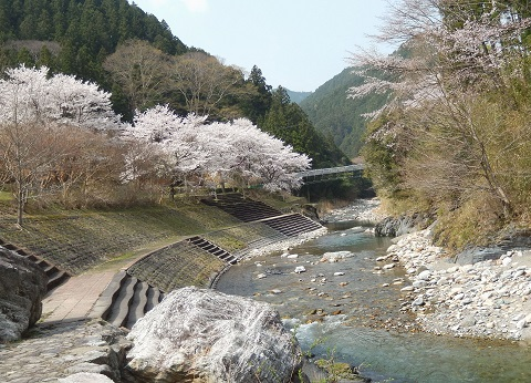 Sakura3042karyugawayori