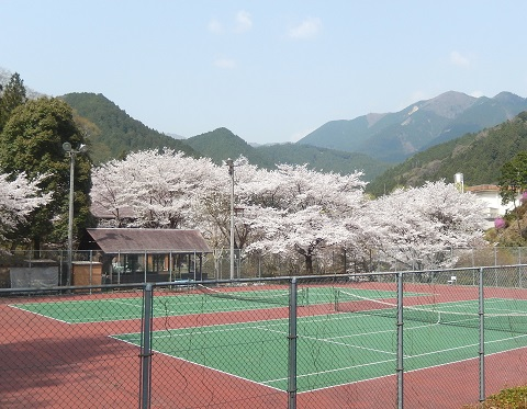 Sakura3042tennzicourt