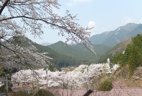 Sakura3042uccurveyori