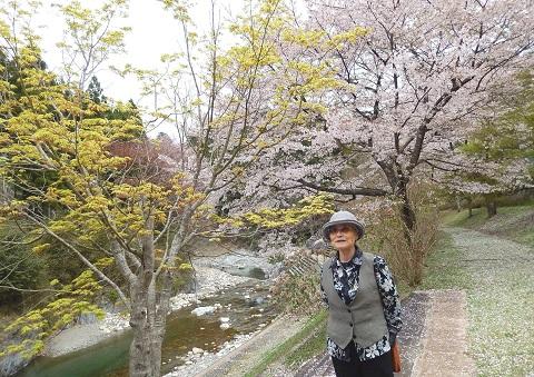 Oikawa3046sakura