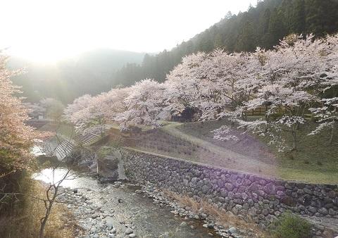 Sakura3046hasikara