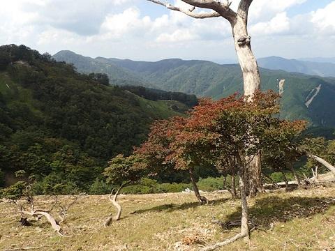 Yuzuriha30829hinooku1