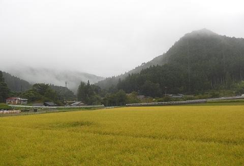 Ameasagiri30910tanbo
