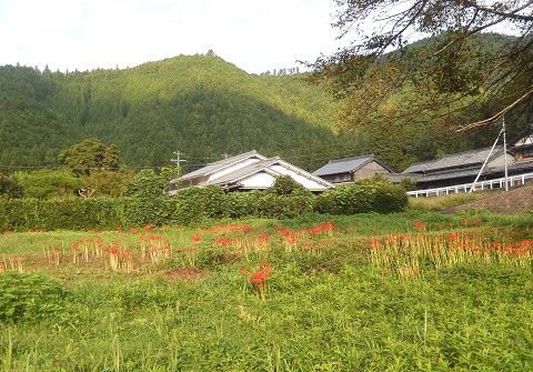 Higanbana30919awano2