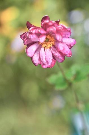 Ohno301213flower0104_2