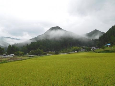 Asagiri2019828tanbo