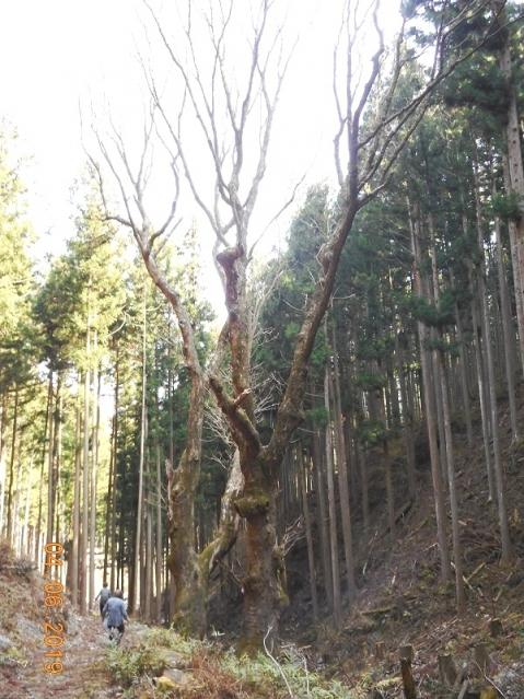 Kaakira201946ootochinoki5