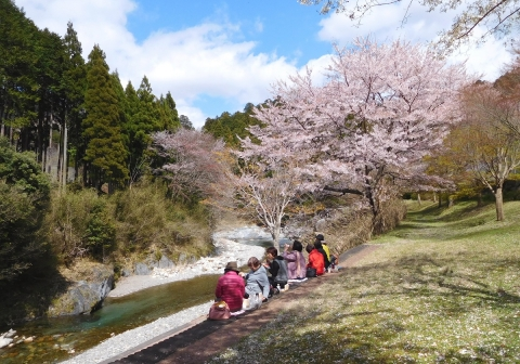 Sakura2019411hanami