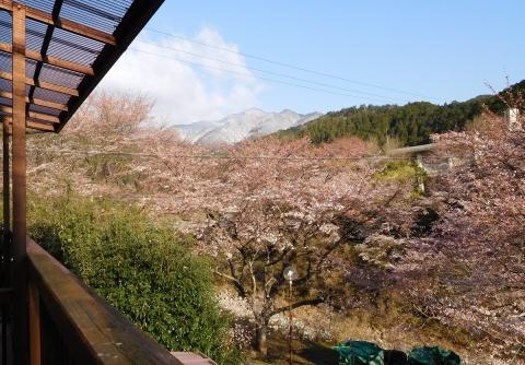 Sakura201943beranda
