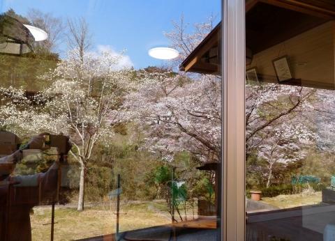 Sakura201944garasu