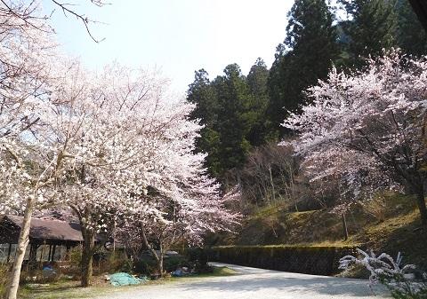 Sakura201946parking1