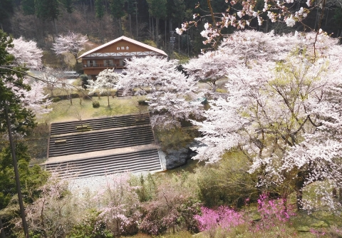 Sakura201946taigankara3