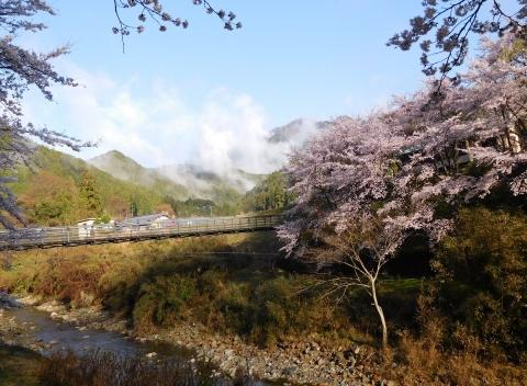 Sakura201948kiritatu
