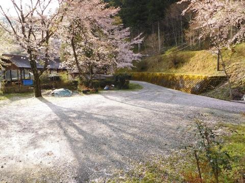 Sakurajutan2019415