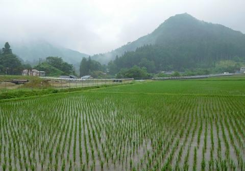 Tanbo201967siroyama