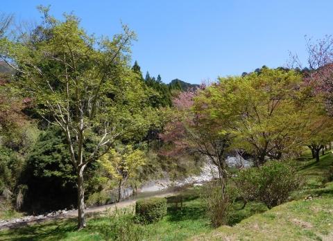 Kobusimomiji202147wakaba2