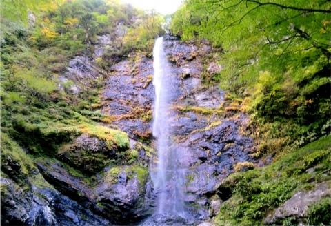 Koyama20201030kazeore
