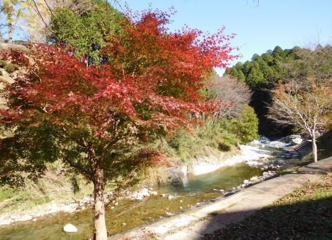 Koyo20191113momijikawa