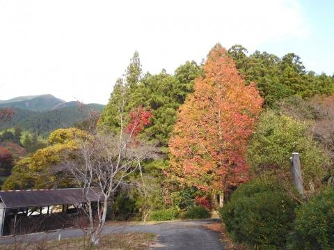 Koyo20191118bbqiriguchi