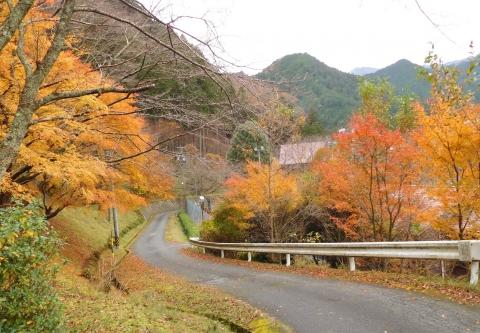 Koyo20191124rindoiriguchi