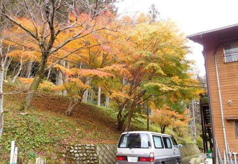 Koyo20191124uranomomiji