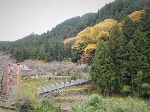 Koyo20201112ookeyaki1