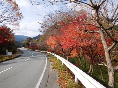 Koyo20201116hazeshoku1