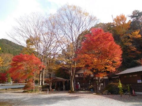 Koyo20201116hazeshoku3