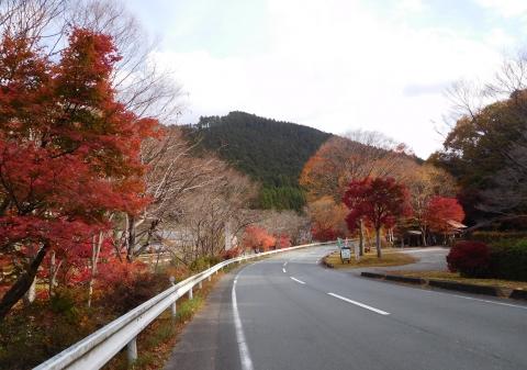 Koyo20201116hazeshoku6