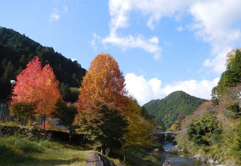 Koyo2020113bafuhanten1