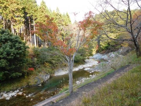 Koyo2020118momijikawa2